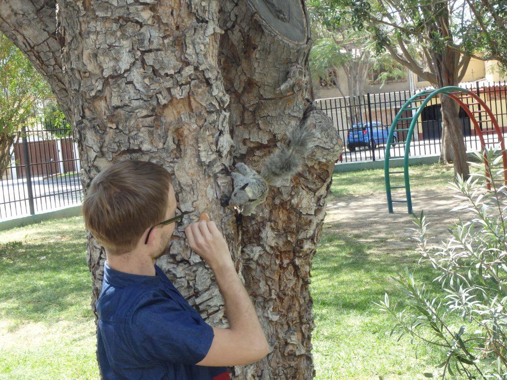 Daniel - dansk volontär i Piura - bekantar sig med en ekorre.